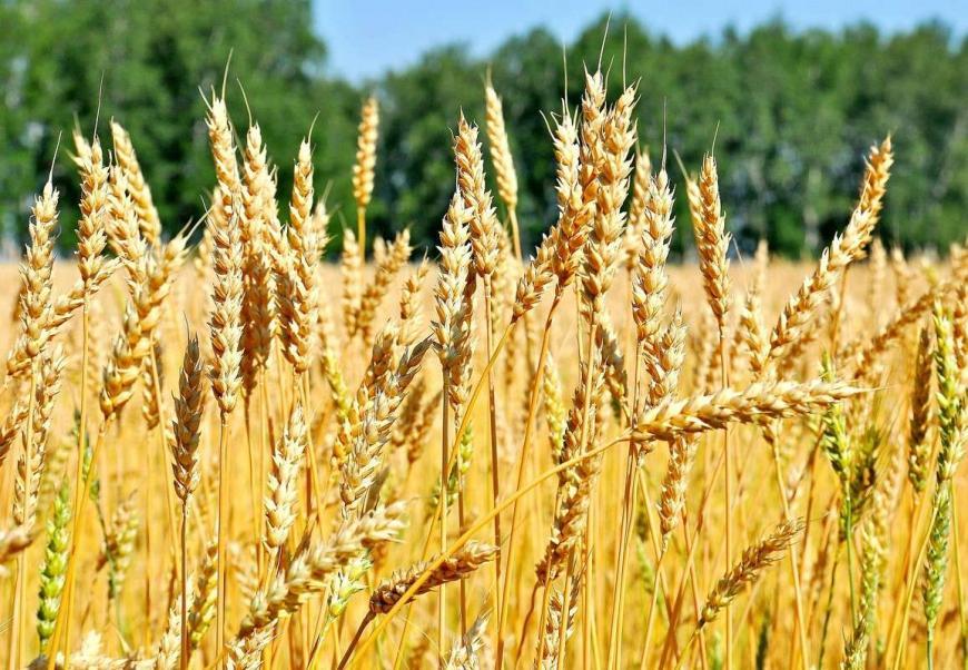 Как Запад содействовал успехам Российской Федерации всельском хозяйстве— Масло против пушек